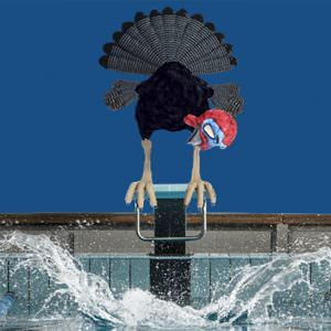 Turkey Relay Swim Registration